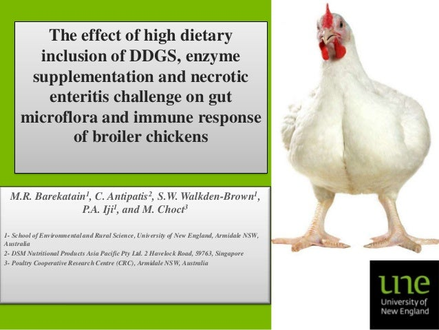 The effect of high dietary inclusion of DDGS, enzyme supplementation and necrotic enteritis challenge on gut microflora an...