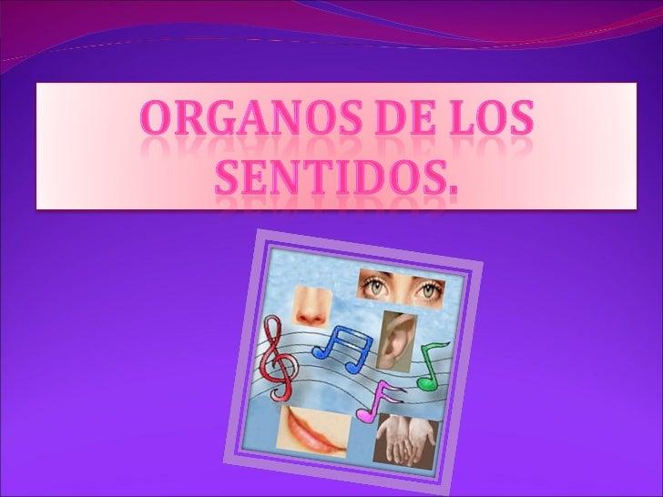 organos sensoriales