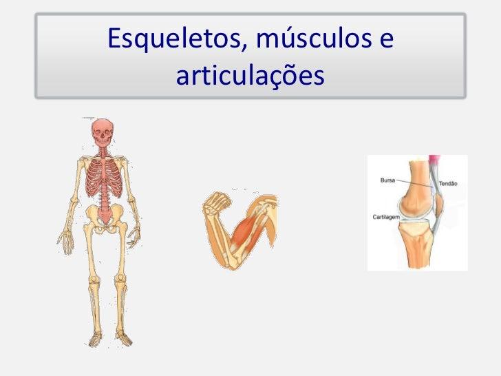 Esqueletos, músculos e      articulações