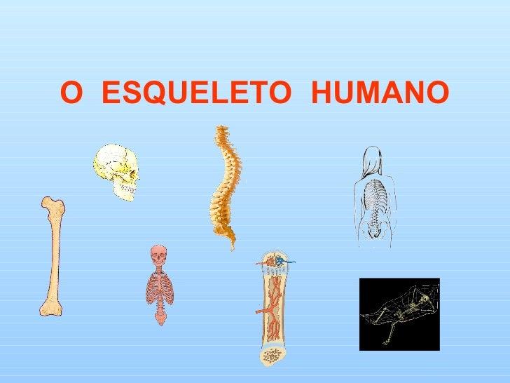 O ESQUELETO HUMANO