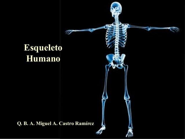 Esqueleto  HumanoQ. B. A. Miguel A. Castro Ramírez