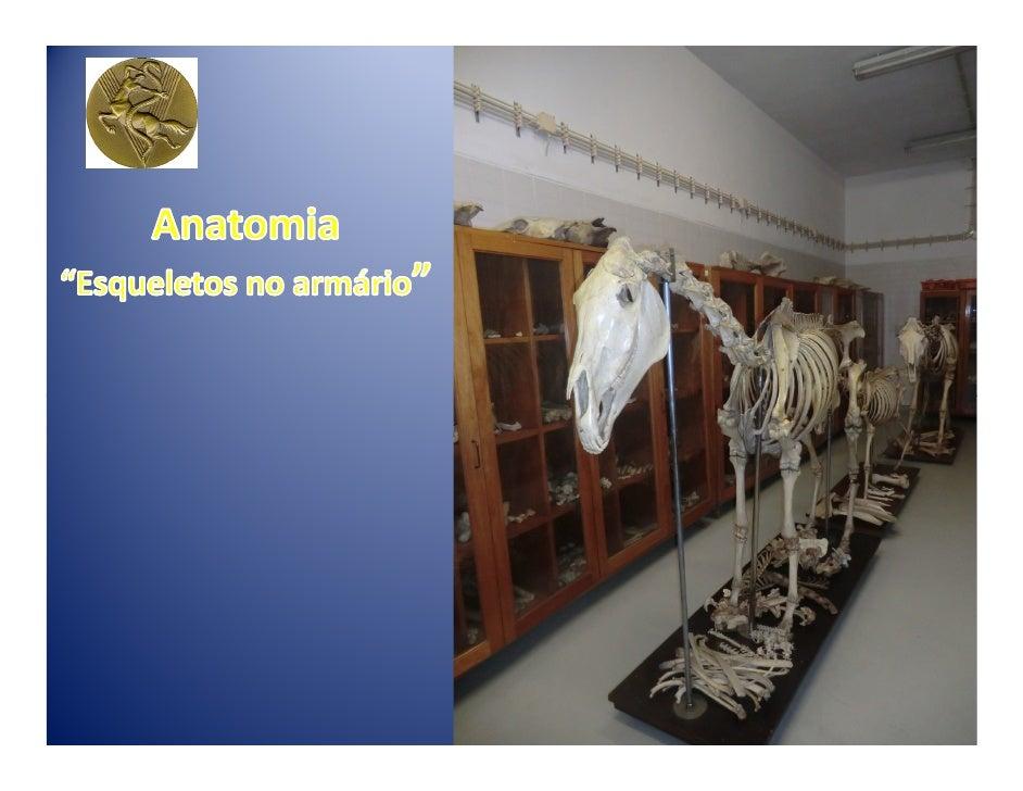 """Anatomia:-termo que provém do grego antigo e quer-dizer """"seccionar através de"""".Trata-se de um ramo da biologia que estuda ..."""