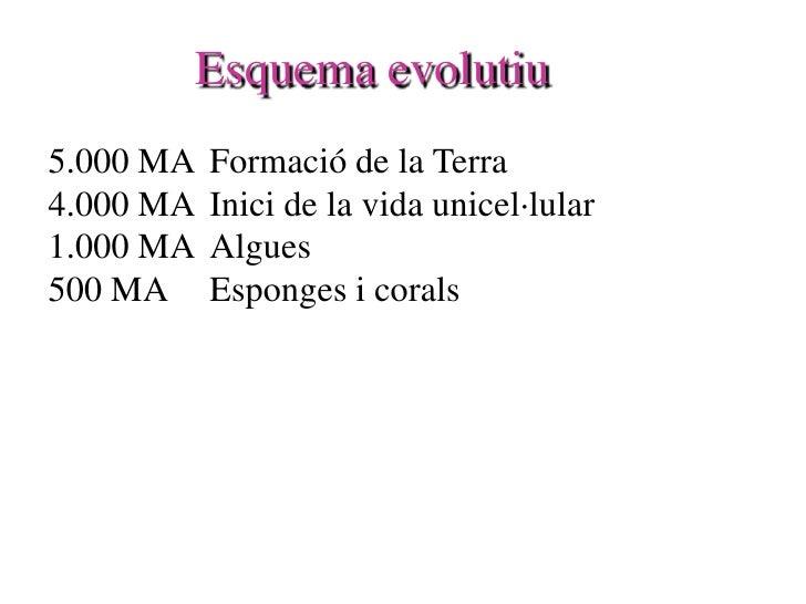 Esquema evolutiu 5.000 MA   Formació de la Terra 4.000 MA   Inici de la vida unicel·lular 1.000 MA   Algues 500 MA     Esp...