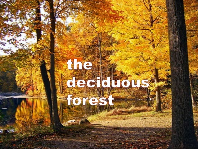Deciduous:falling off or shedding at a particular seasonor stage of growth
