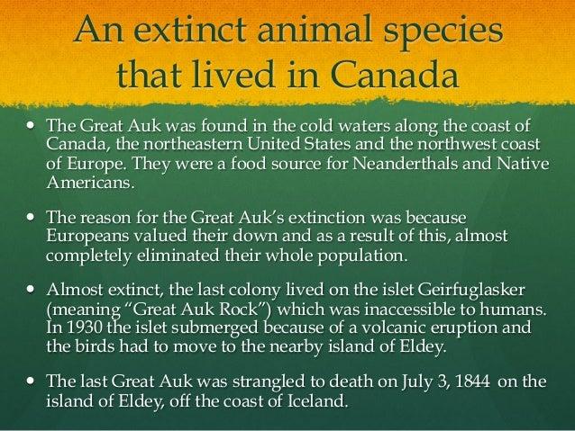 endangered species topic essay