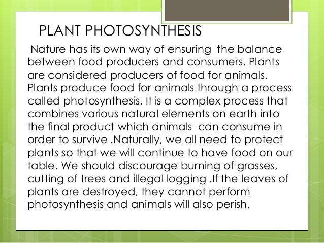 essays on photosynthesis