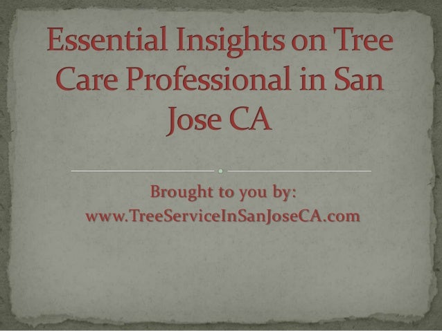 Essential Insights on Tree Care Professional in San Jose CA