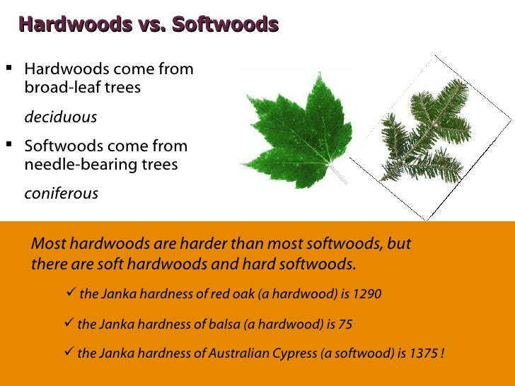 Hardwood Vs Softwood ~ Essentials of specifying wood flooring aia ces