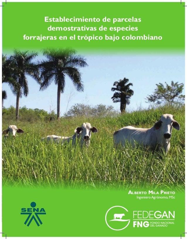 Establecimiento de parcelas demostrativas de especies forrajeras en el trópico bajo colombiano Alberto Mila Prieto Ingenie...