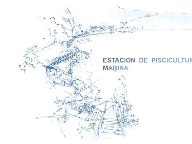 ESTACION  DE  PISCICULTURA  MARINA<br />