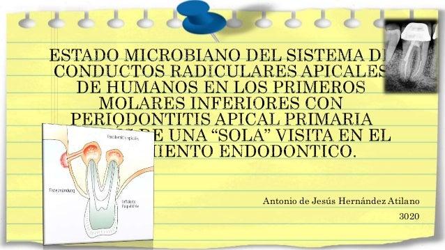 Antonio de Jesús Hernández Atilano 3020