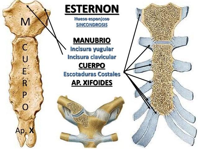 Esternon