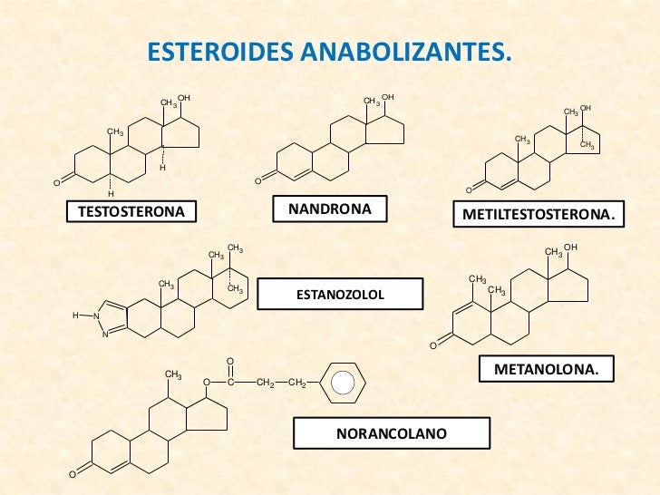 las hormonas esteroideas se sintetizan en