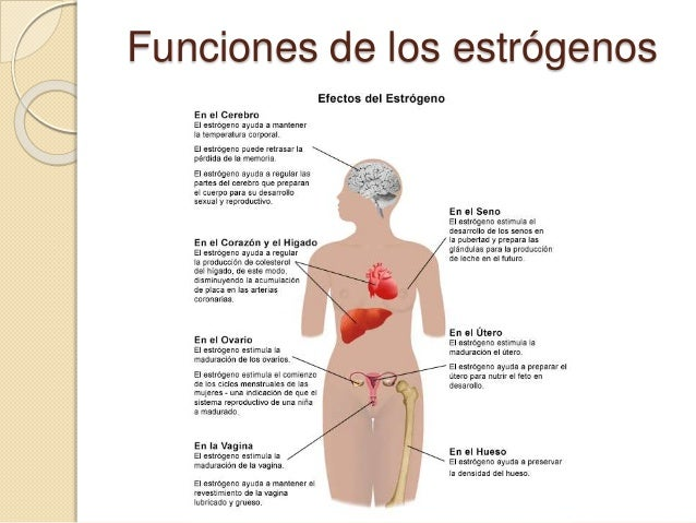esteroidogenesis testicular ppt