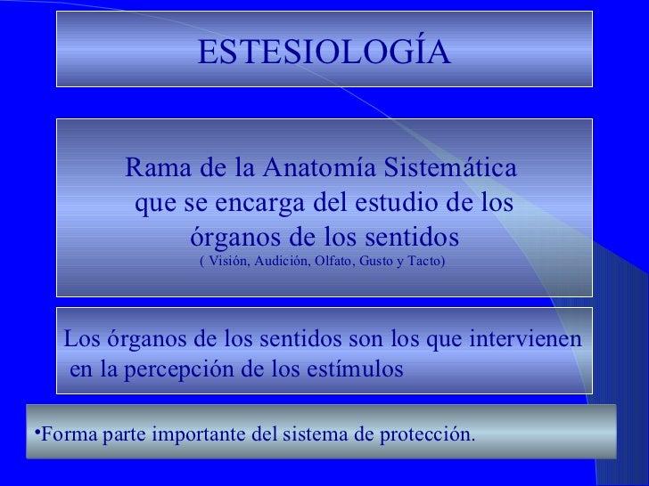 ESTESIOLOGÍA Rama de la Anatomía Sistemática  que se encarga del estudio de los órganos de los sentidos  ( Visión, Audició...