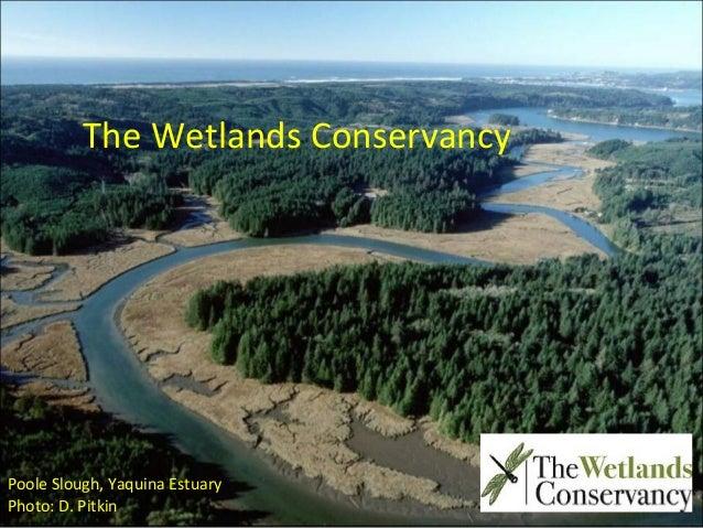 Esther Lev, Wetlands Conservancy