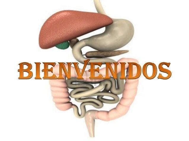 Estomago Esofago Duodeno