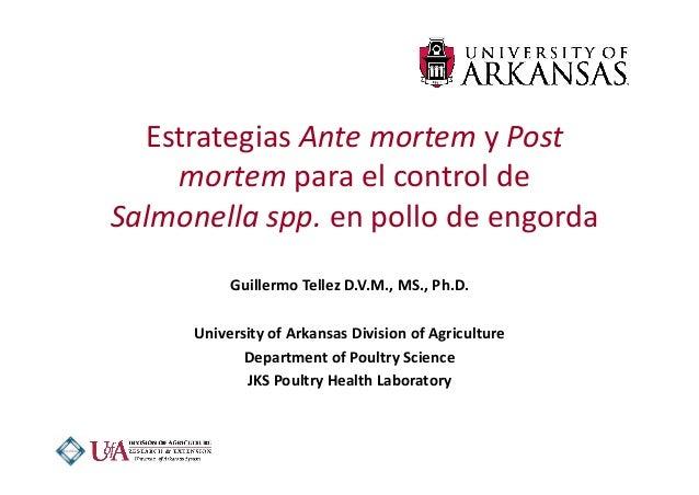 EstrategiasAntemortemyPost mortemparaelcontrolde Salmonellaspp.enpollodeengorda GuillermoTellezD.V.M.,M...