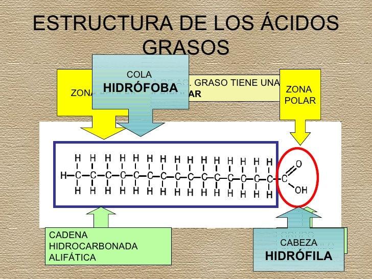Los Acidos Grasos ácidos Grasos la Molécula