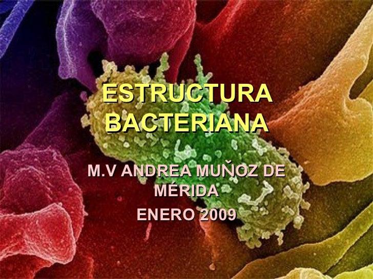 Estructurabacteriana