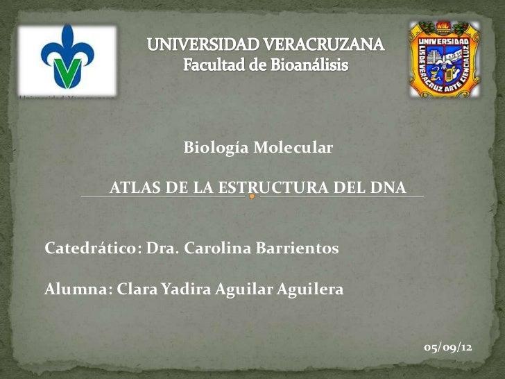 Biología Molecular        ATLAS DE LA ESTRUCTURA DEL DNACatedrático: Dra. Carolina BarrientosAlumna: Clara Yadira Aguilar ...