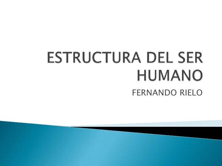 Estructura Del Ser Humano