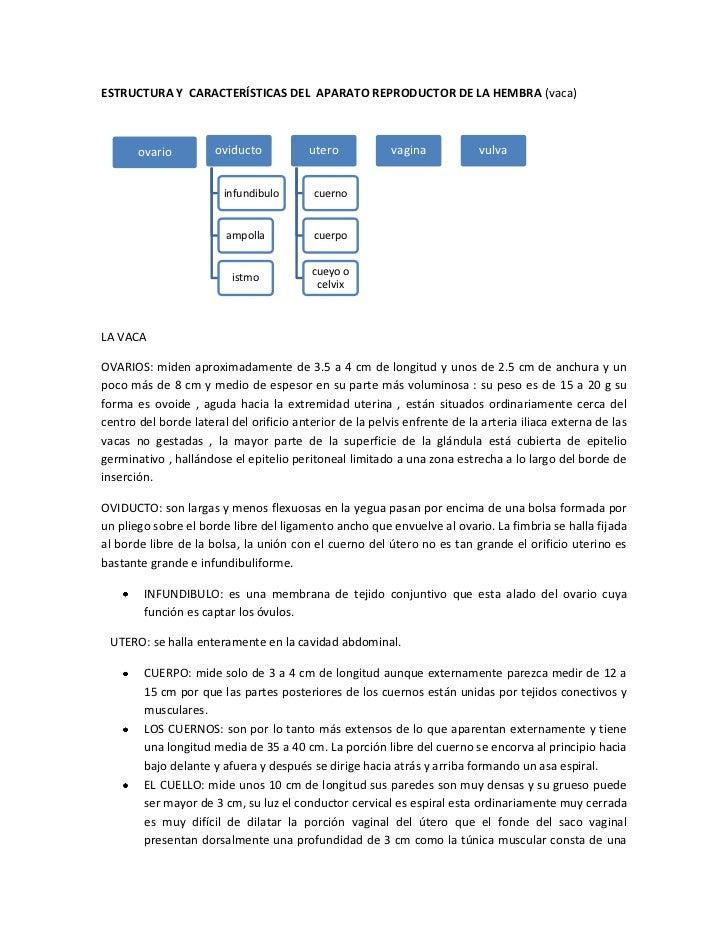 ESTRUCTURA Y CARACTERÍSTICAS DEL APARATO REPRODUCTOR DE LA HEMBRA (vaca)       ovario         oviducto           utero    ...