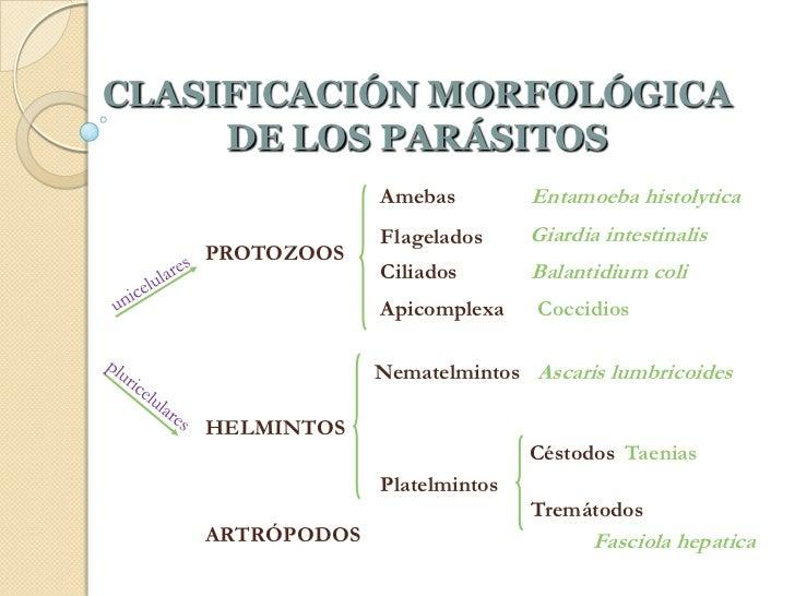 Los parásitos las causas mentales