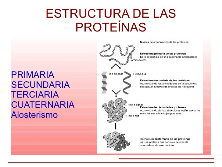 Estruturaproteinas2 on 7926
