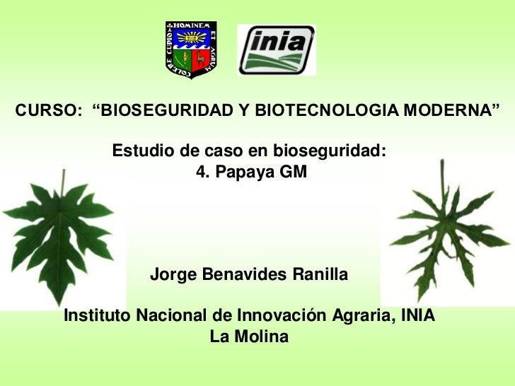 """CURSO: """"BIOSEGURIDAD Y BIOTECNOLOGIA MODERNA""""         Estudio de caso en bioseguridad:                   4. Papaya GM     ..."""