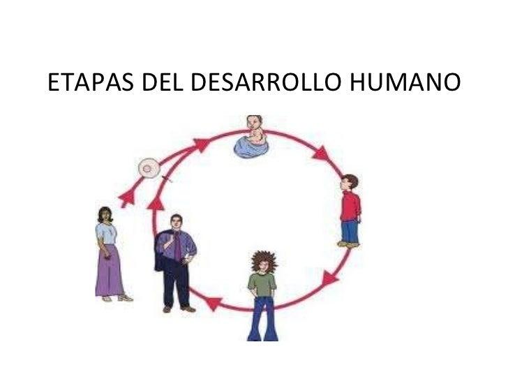 Etapas De Desarrollo Del Ser Humano