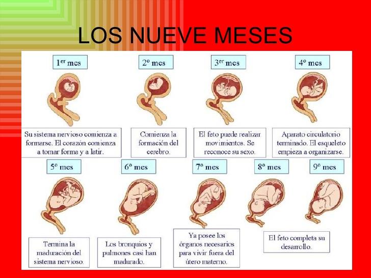 etapas-del-embarazo-9-728.jpg? ...