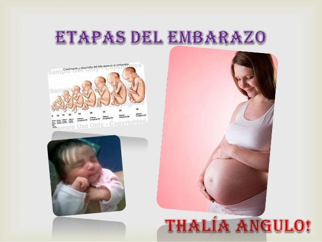 Etapas del embarazo 3