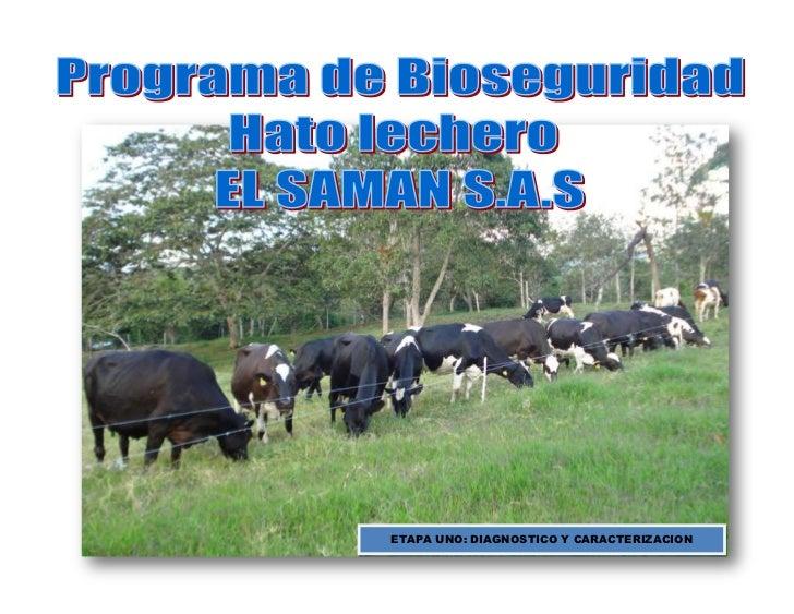 Etapas previas al programa bioseguridad el saman