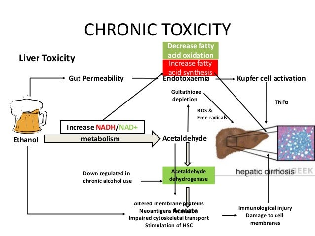 Alcohol toxicity Toxicity System Of A Down Video