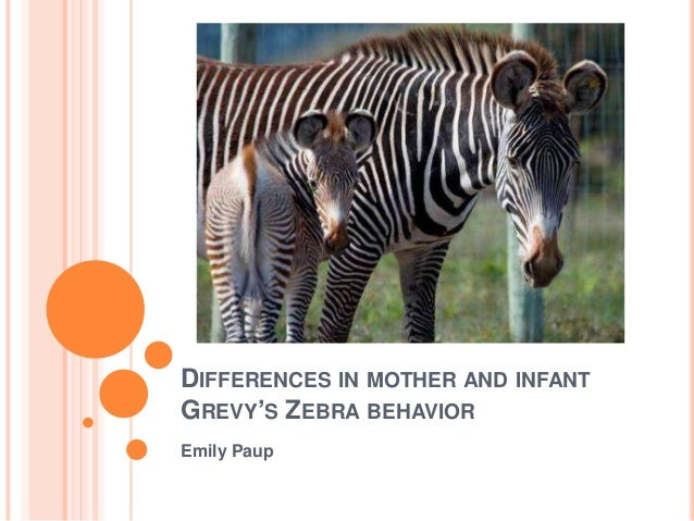DIFFERENCES IN MOTHER AND INFANTGREVY'S ZEBRA BEHAVIOREmily Paup