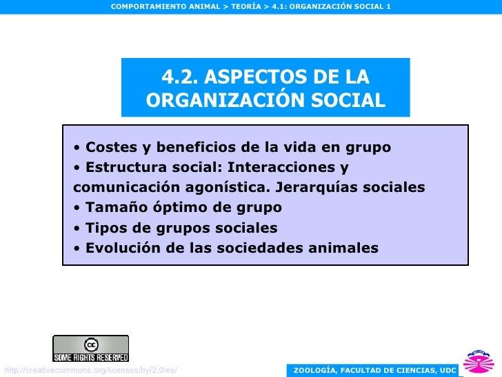 4.2. ASPECTOS DE LA ORGANIZACIÓN SOCIAL <ul><li>Costes y beneficios de la vida en grupo   </li></ul><ul><li>Estructura soc...