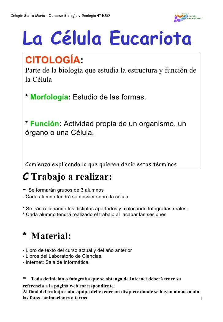 Colegio Santa María - Ourense Biología y Geología 4º ESO CITOLOGÍA : Parte de la biología que estudia la estructura y func...