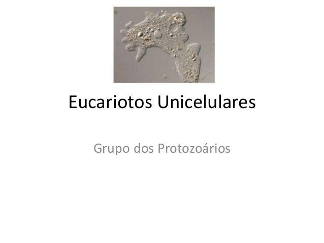 Eucariotos Unicelulares Grupo dos Protozoários