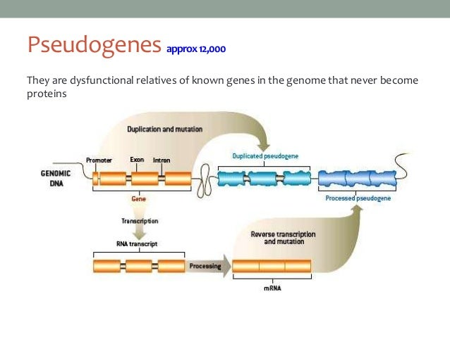 mapping a eukaryotic gene Chapter 10 eukaryotic gene mapping i ntroduction in previous chapters the relative location of two loci has been examined we have used the frequency of.