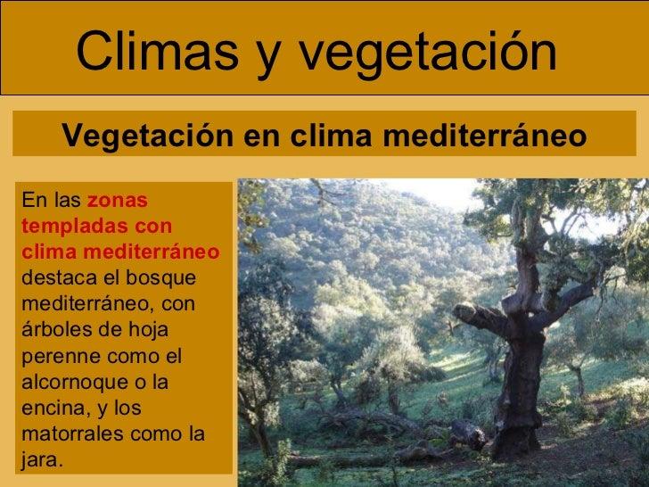 Europa paisajes for Arboles de hoja perenne para clima continental