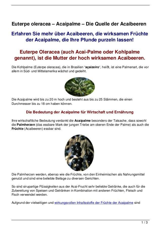 Euterpe oleracea – Acaipalme – Die Quelle der AcaibeerenErfahren Sie mehr über Acaibeeren, die wirksamen Früchte      der ...
