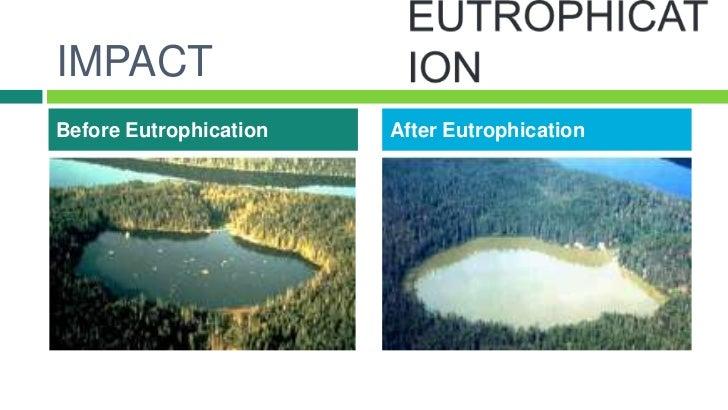 eutrophication essay