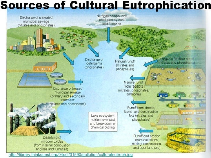 cultural eutrophication essay