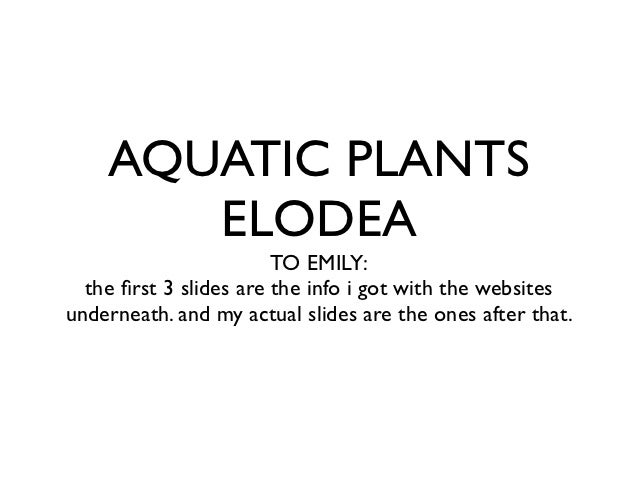 AQUATIC PLANTS       ELODEA                        TO EMILY:  the first 3 slides are the info i got with the websitesundern...