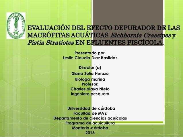 EVALUACIÓN DEL EFECTO DEPURADOR DE LAS MACRÓFITAS ACUÁTICAS Eichhornia Crassipes y Pistia Stratiotes EN EFLUENTES PISCÍCOL...
