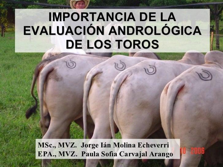 IMPORTANCIA DE LA EVALUACIÓN ANDROLÓGICA DE LOS TOROS MSc., MVZ.  Jorge Ián Molina Echeverri EPA., MVZ.  Paula Sofìa Carva...