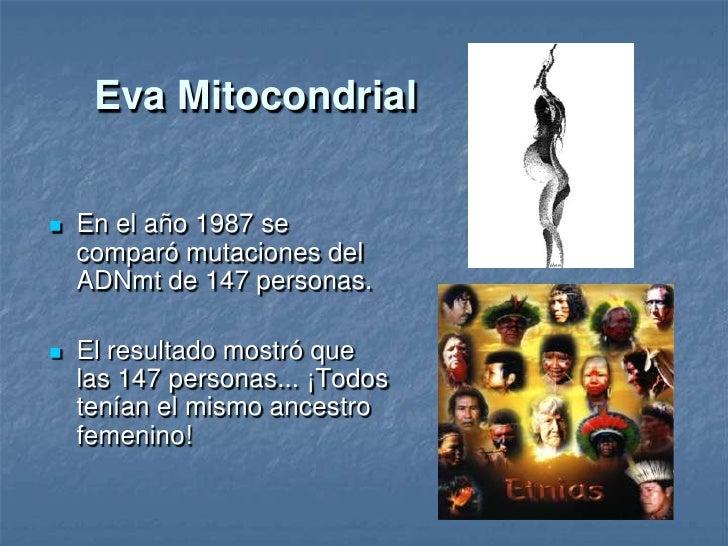 Eva mitocondrial