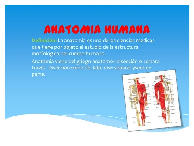 ANATOMIA HUMANADefinición: La anatomía es una de las ciencias medicasque tiene por objeto el estudio de la estructuramorfo...
