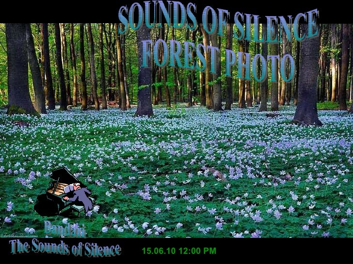 15.06.10   11:59 AM Bandari The Sounds of Silence SOUNDS OF SILENCE FOREST PHOTO